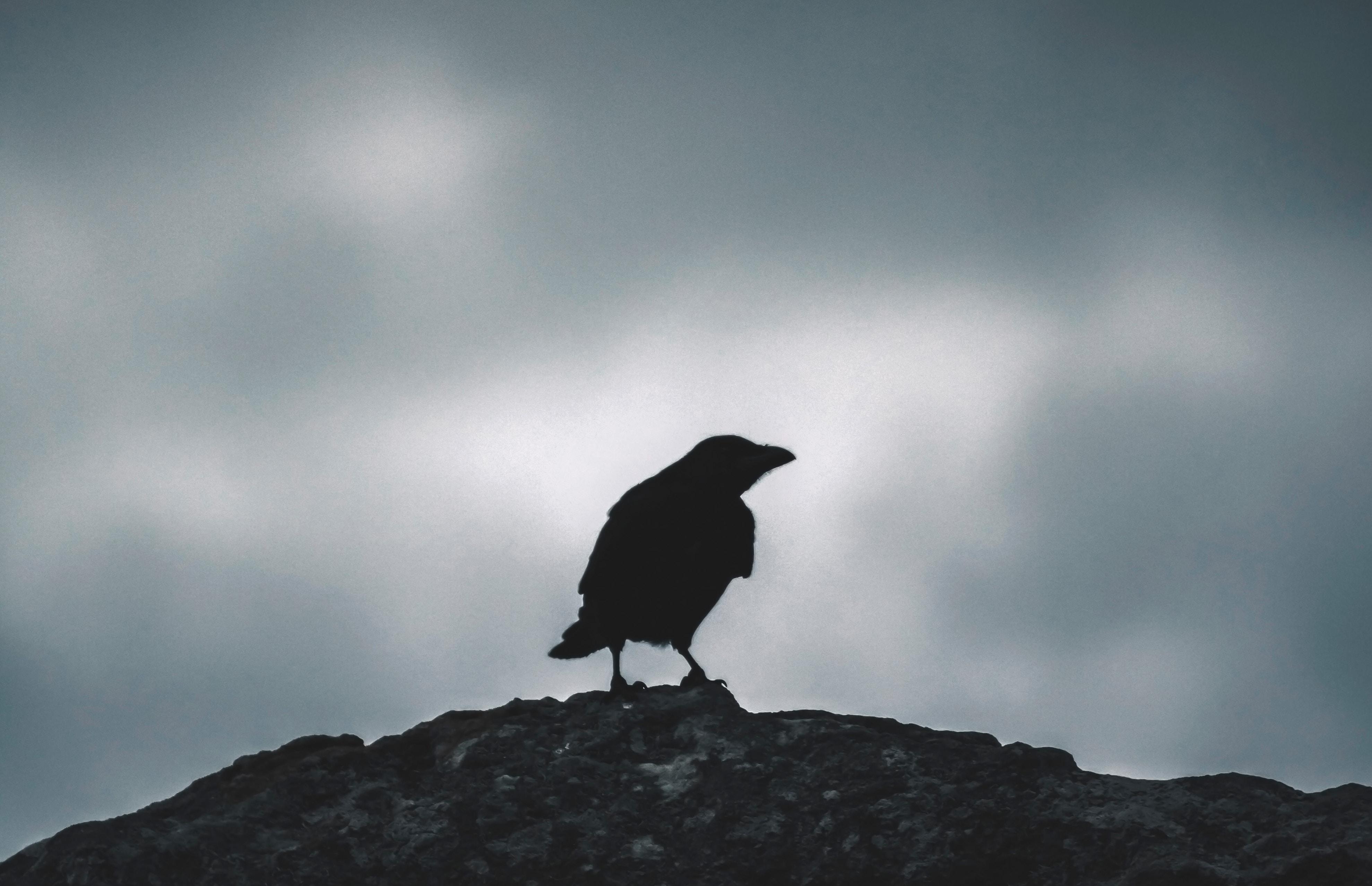 Primitive Halloween Edgar Allan Poe Spooky Journal Cupboard Tuck Turkey Quill Feather Raven